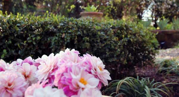 Garden2-600